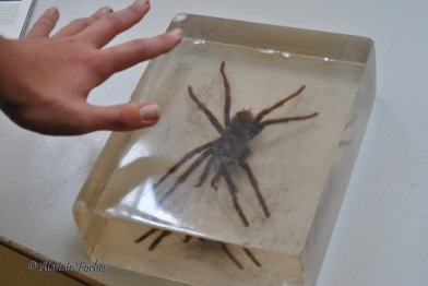 Spider from the Natural History Museum in London where I took my son for his 16th birthday