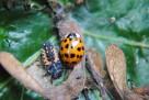 Bug 10