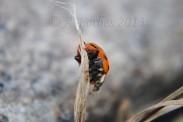 Bug 3