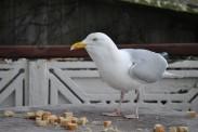 Birds 18 02 14 02