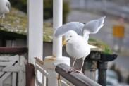 Birds 18 02 14 03
