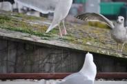 Birds 18 02 14 04