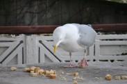 Birds 18 02 14 05