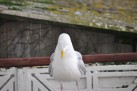 Birds 18 02 14 07