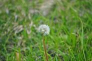 Spring 13