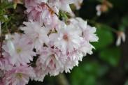 Flower 6
