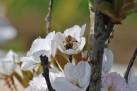 WTT Blossom (4)