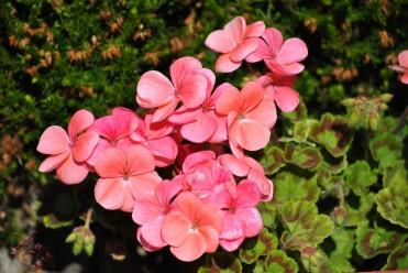 Flower Power (10)