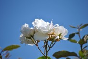 Flower Power (2)