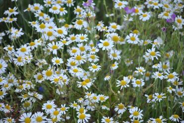Flower Power (4)