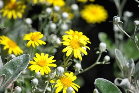 Flower Power (9)