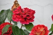 Flowers (5)