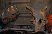 T-Rex and Stegosaurus skulls