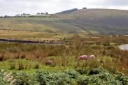 Cumbria (25)