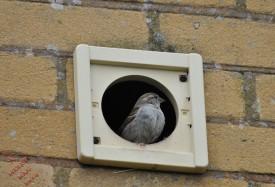 Watch The Birdie (11)