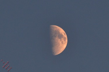 MoonLit (1)