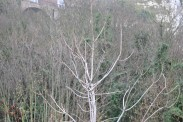 Dead Trees (3)