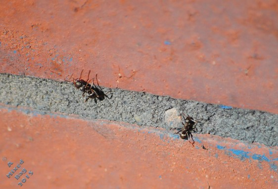 August 13 2015 Ants