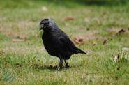 July Birds (10)