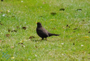 July Birds (11)