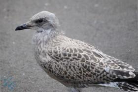 July Birds (5)