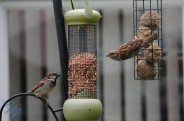 July Birds (8)