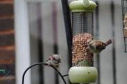 July Birds (9)