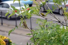 June Birds (4)