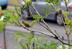 June Birds (5)