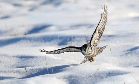 BirdFlySnow